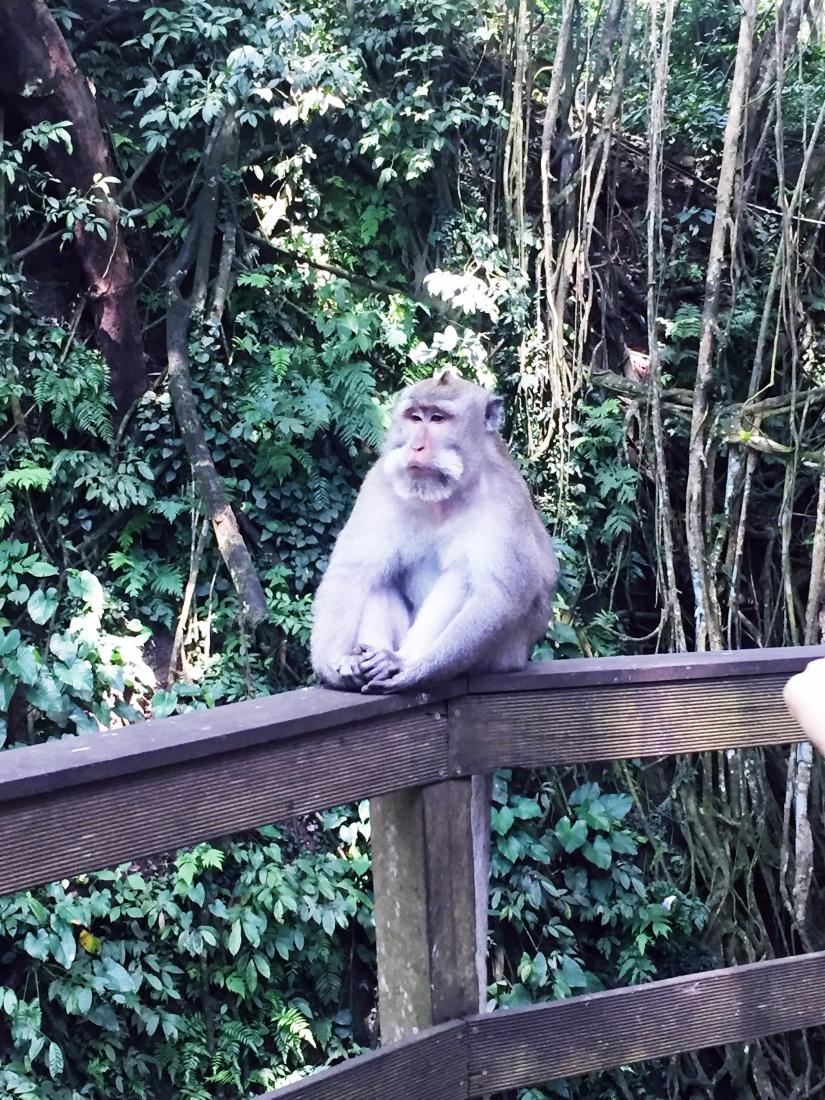 Sacred Monkey Forest Sanctuary – Ubud,Bali.